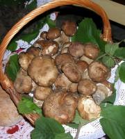 Funghi (foto di repertorio)