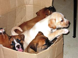 I cinque cagnolini