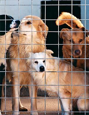 Da alcuni mesi il canile comprensoriale di Ripatransone permette alle associazioni di volontariato come L'Amico Fedele di coadiuvare il personale della Picenambiente nella cura degli animali ospiti