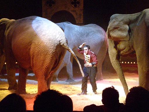 Uno spettacolo del circo Darix Togni
