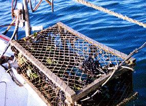 Nasse per la piccola pesca artigianale
