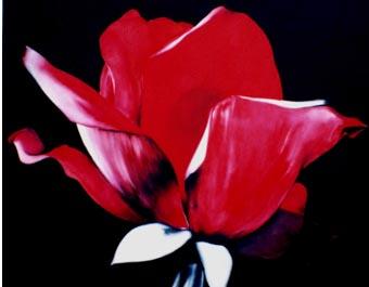 Flower di Florinda Recchi