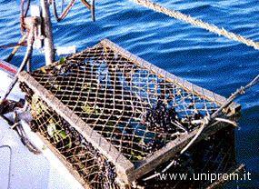 Slow Food punta sulla piccola pesca