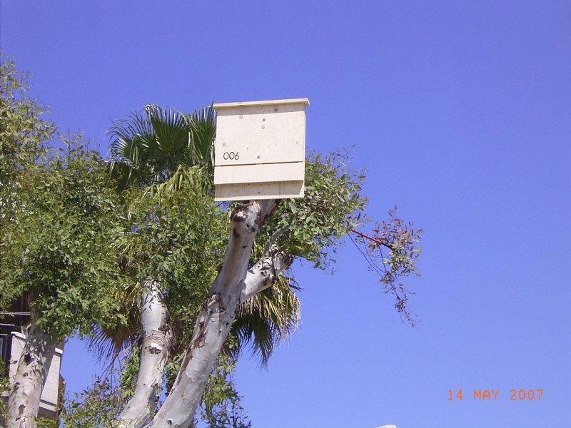 2. Bat Box alla Sentina