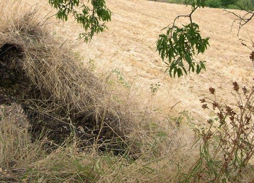 I campi arsi a causa della siccità