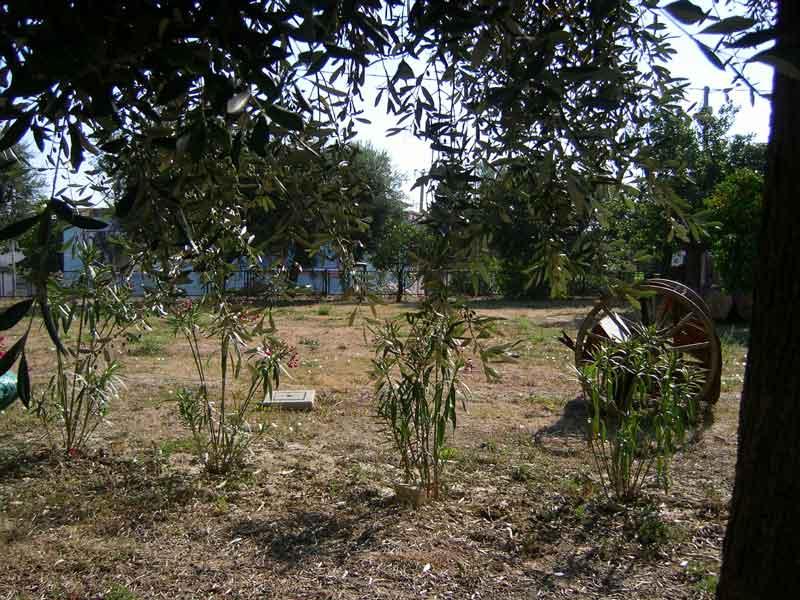 Le piantine di oleandri nel giardino antistante la Torre e la casa doganale di Carlo V