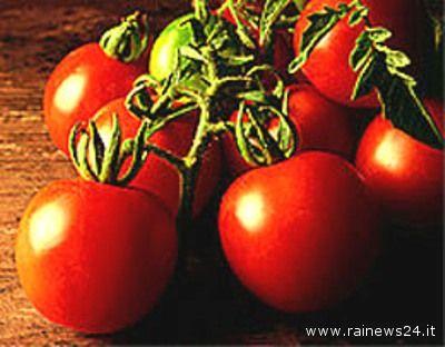 La Confederazione italiana agricoltori lancia l'allarme sui pomodori Ogm