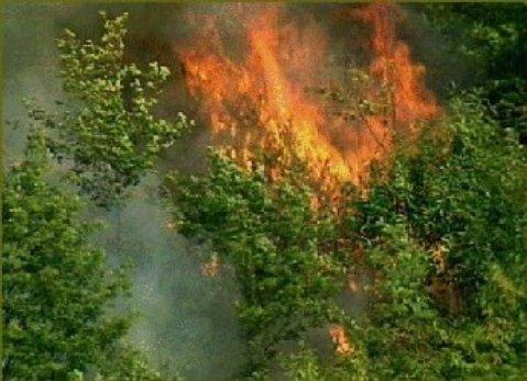 Emergenza incendi, situazione critica nell'Ascolano