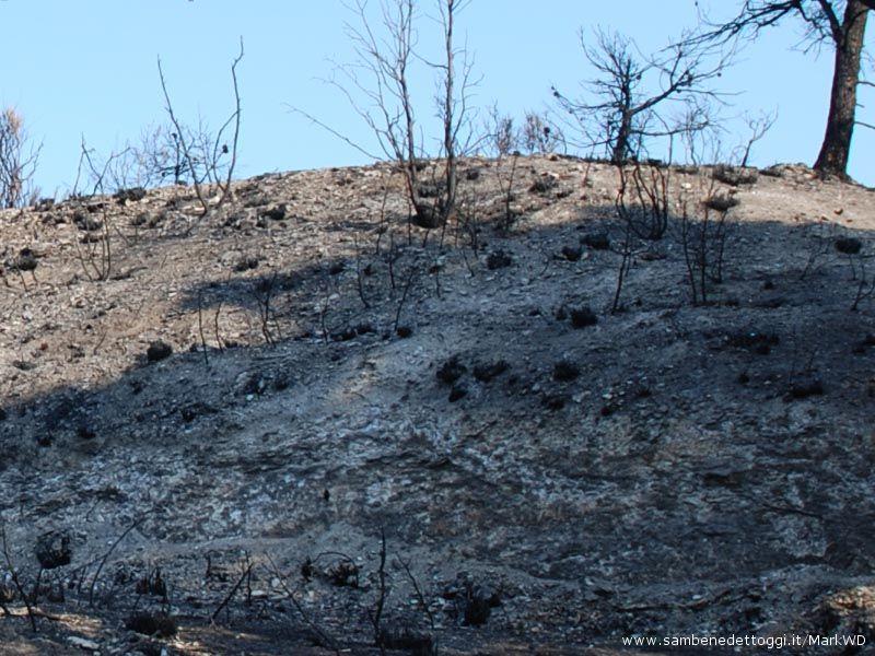 Le fiamme sono arrivate anche dall'altra parte della strada Provinciale Cuprense