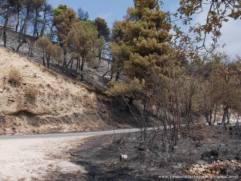 L'incendio ha colpito entrabi i costoni della strada