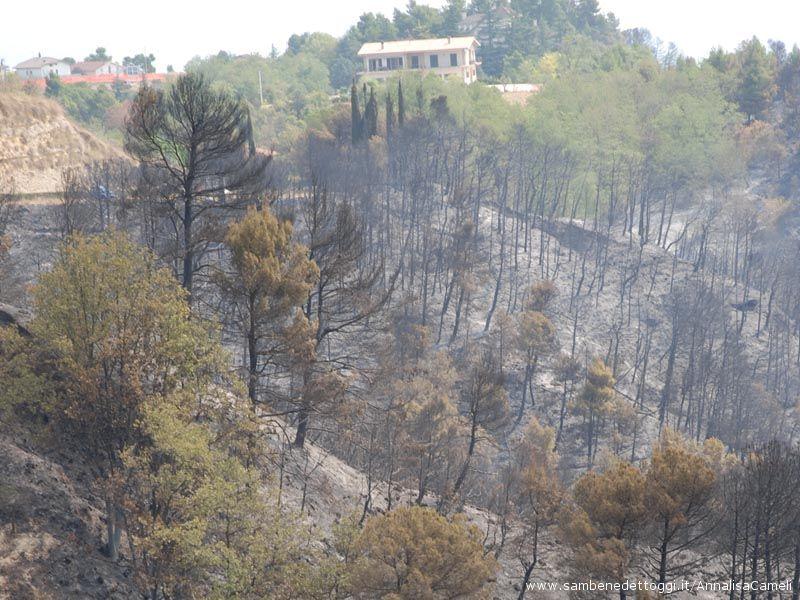 Le fiamme hanno lambito anche alcune case, senza danni alle persone