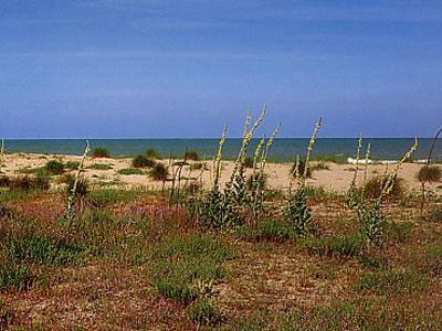 Un tratto del biotopo marino a Martinsicuro