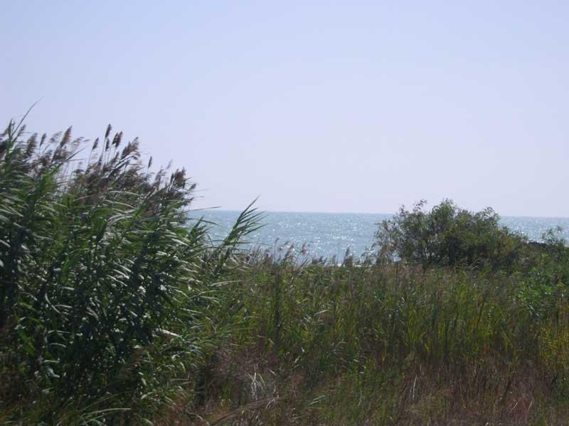 Un tratto del biotopo costiero a Martinsicuro