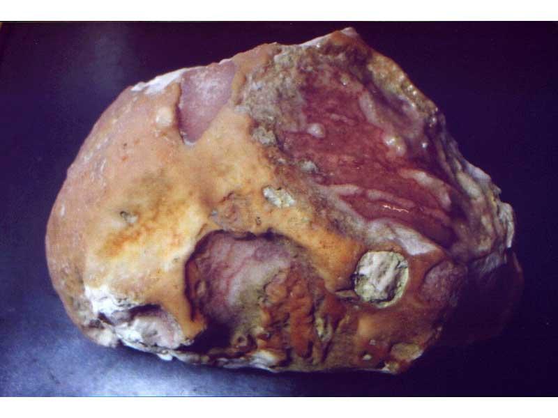 Il cranio fossile rinvenuto sul greto del Salinello