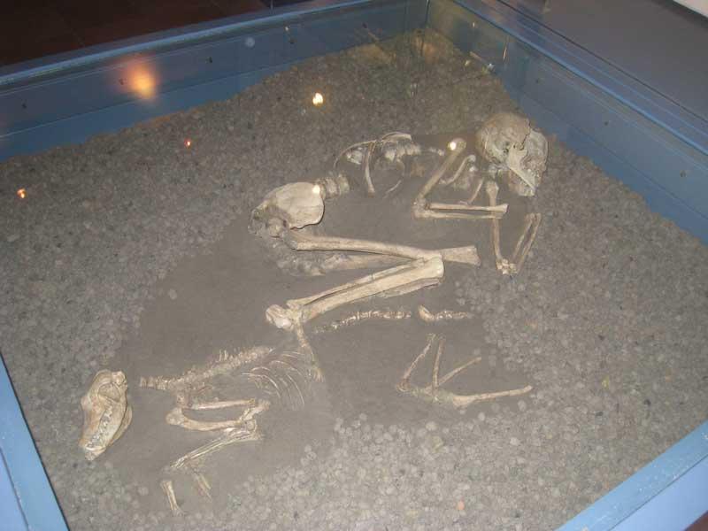 Sepoltura femminile con cane. Inizio IV millennio a.C.