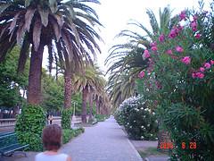 Il verde di un tratto di viale Buozzi