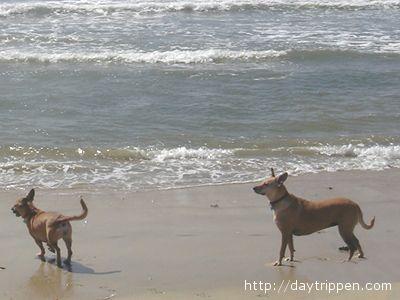 Uno spazio dedicato ai cani nella spiaggia della Riviera?