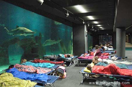 Una notte nell'Acquario di Genova per i ragazzi che vogliono conoscere le meraviglie del mare: si tratta di un'iniziativa ideata dai Servizi Educativi della struttura ligure (http://www.megamodo.com/una-notte-con-gli-squali/anticipazioni/)