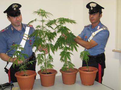 I carabinieri di San Benedetto con le piante di marijuana sequestrate