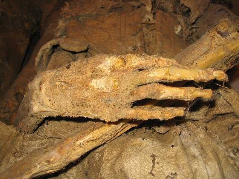 Particolare di una mummia
