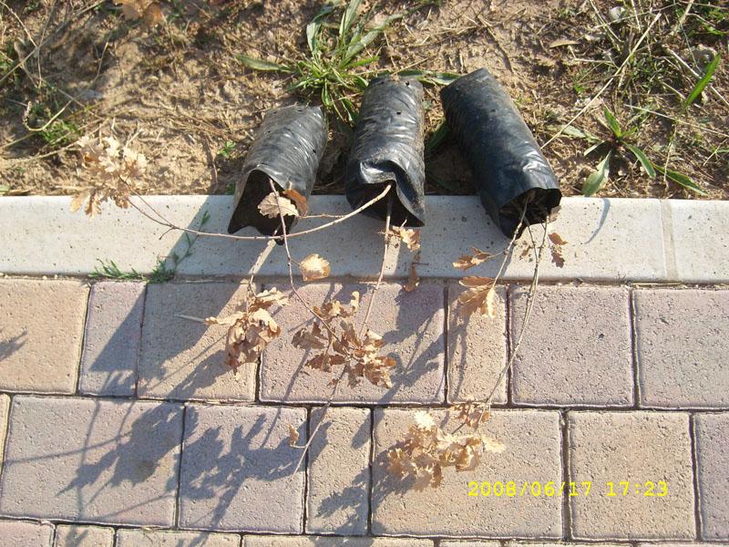 Le piante secche