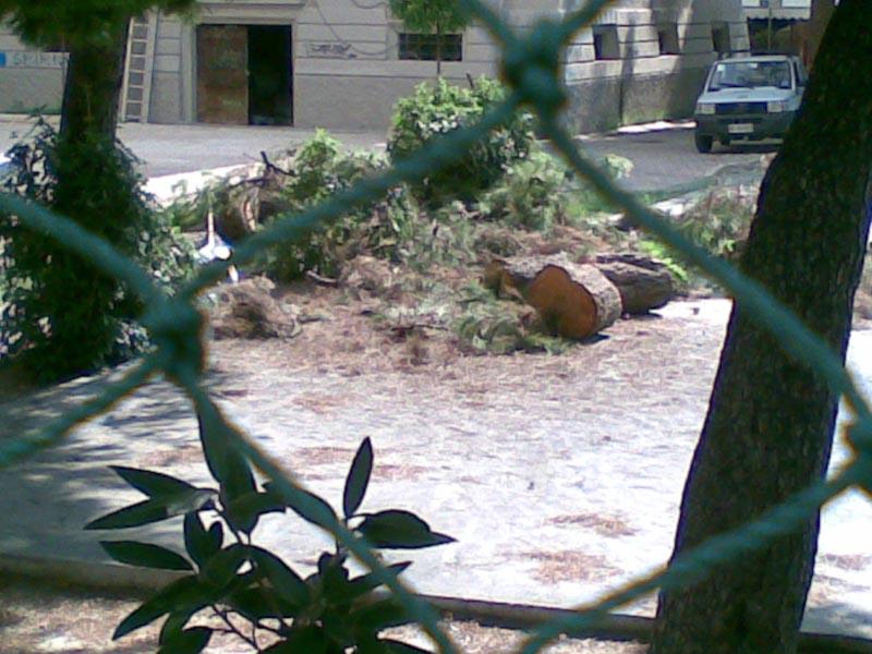 Pini tagliati nel parchetto delle scuole elementari Giuseppe Speranza