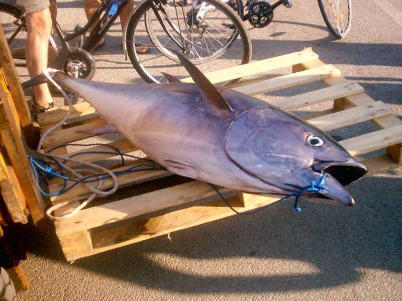 Il tonno catturato dall'equipaggio