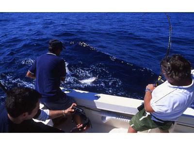 A Giulianova dal 28 al 30 agosto 24 equipaggi si sono contesi il titolo nazionale del Campionato di Pesca d'Altura