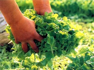 Tanti i punti di forza del distretto agroalimentare piceno