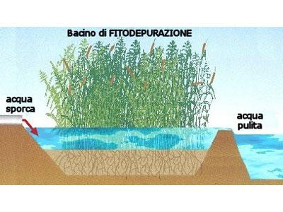L'acqua sporca convogliata nelle vasche entra in contatto con le radici di piante specifiche che innescano attraverso lo sviluppo di batteri sulle proprie radici un processo di depurazione dei reflui