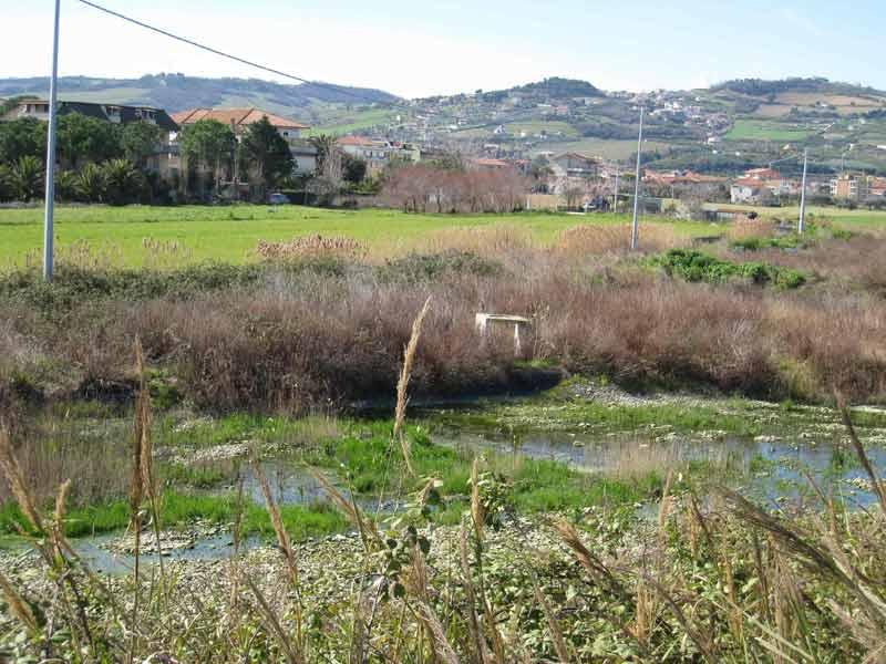 Una delle vasche di fitodepurazione dell'impianto di Martinsicuro mai portate a termine