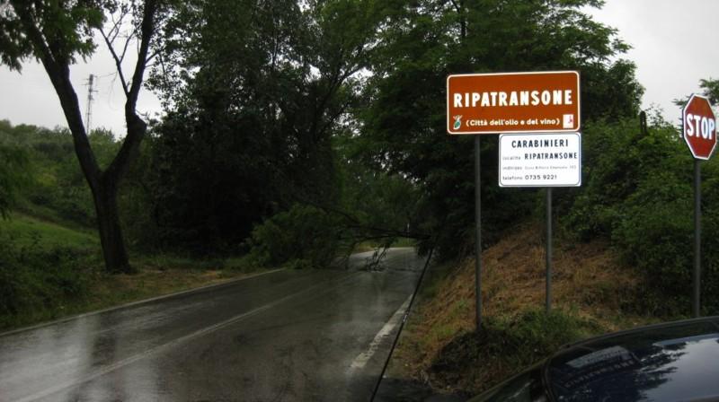 Un albero caduto in mezzo alla strada: danni causati dalla pioggia lungo la strada provinciale LungAlbula (in territorio di Ripatransone) (Foto d'Archivio)