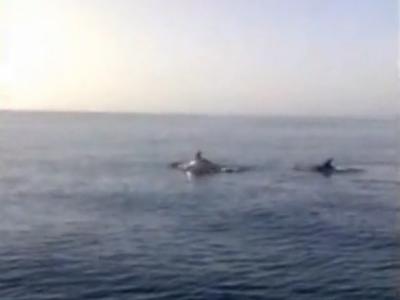 Delfini al largo di Martinsicuro