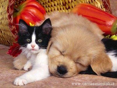 Cani e gatti protagonisti della