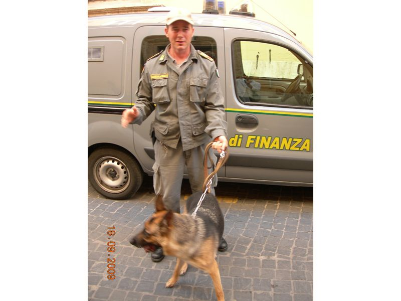 Cani antidroga in azione