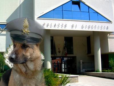cane antidroga della Guardia di Finanza sullo sfondo del Palazzo di Giustizia di San Benedetto del Tronto