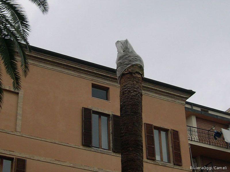 Una palma sottoposta a cure nel Giardino comunale di Grottammare