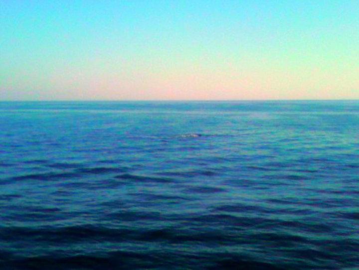 Medio Adriatico
