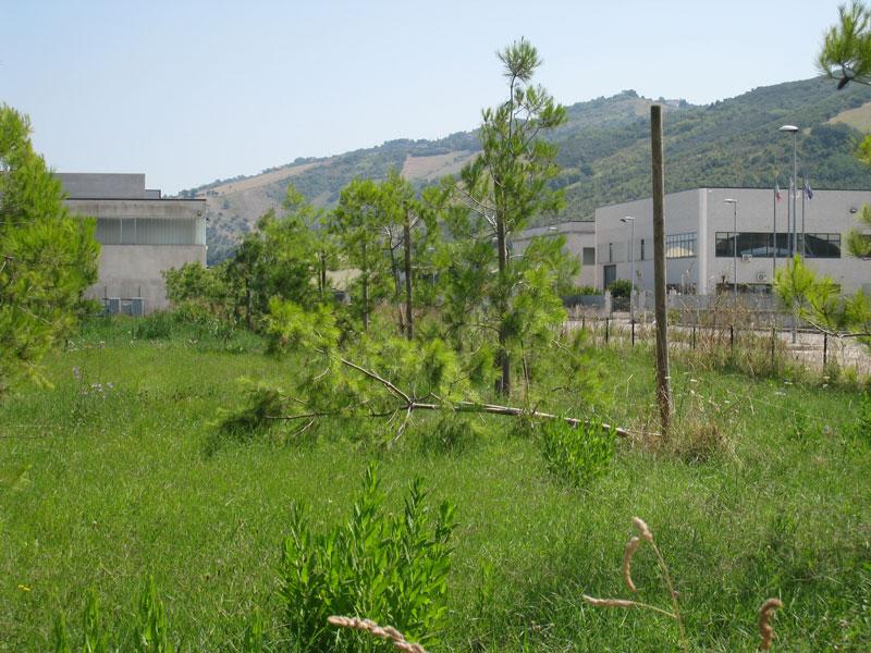 Un'area verde priva di manutenzione