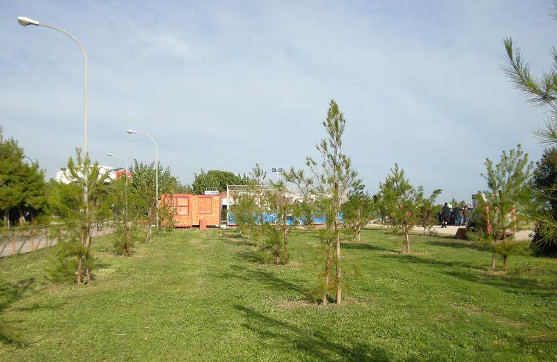 I pini piantati a nord della zona Ballarin