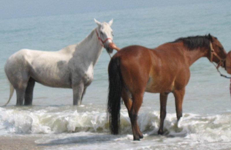 Sentina, cavalli che fanno bagno in mare in piena stagione estiva