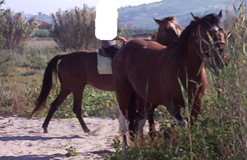 Cavalli alla Sentina