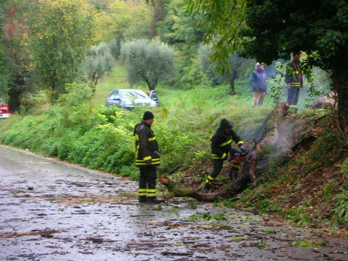 Albero caduto sulla strada verso Ragnola, 26 ottobre 2010