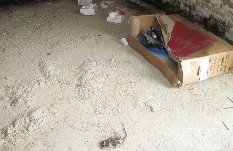 Un topo morto nello scantinato di una casa popolare