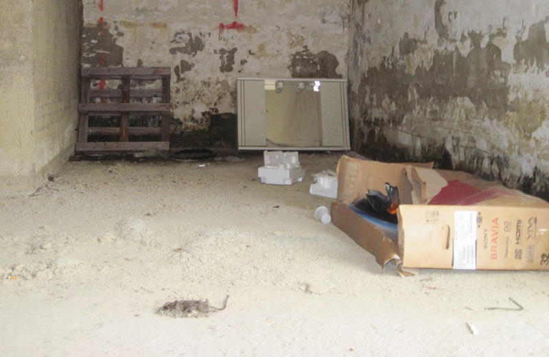 Un topo morto nello scantinato della casa popolare