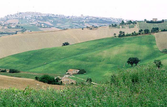 Campagna marchigiana (ascoliconfagricoltura.it)