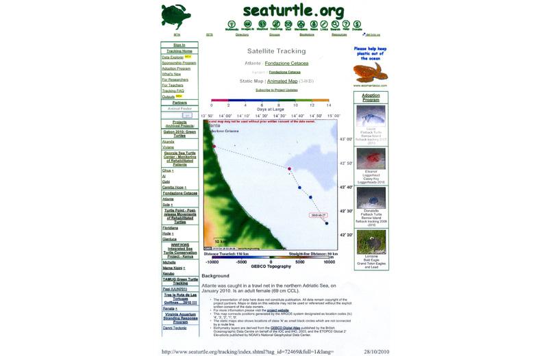 Il viaggio della tartaruga marina Atlante aggiornato al 27 ottobre