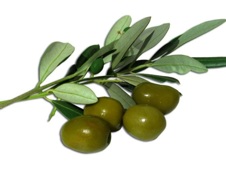 oliva ascolana
