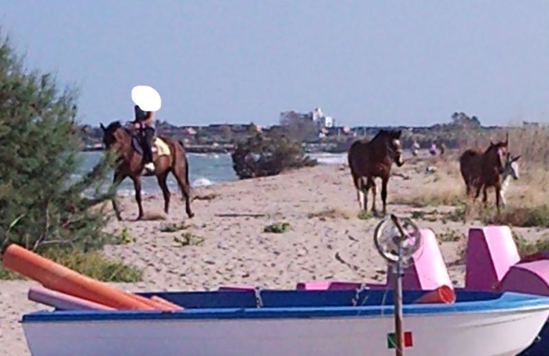 Sentina, cavalli al trotto e in libertà durante l'estate