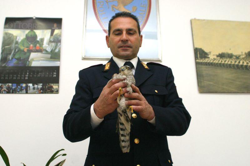 Il piccolo falco soccorso dalla Polizia Stradale